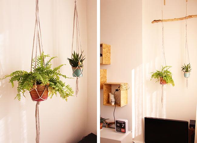 Mes plantes suspendues