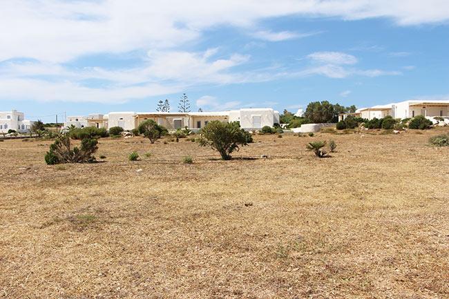 paros-vegetation