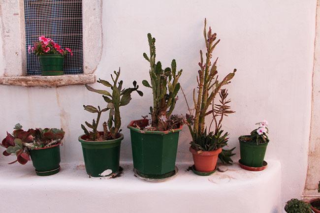 paros-vegetation1