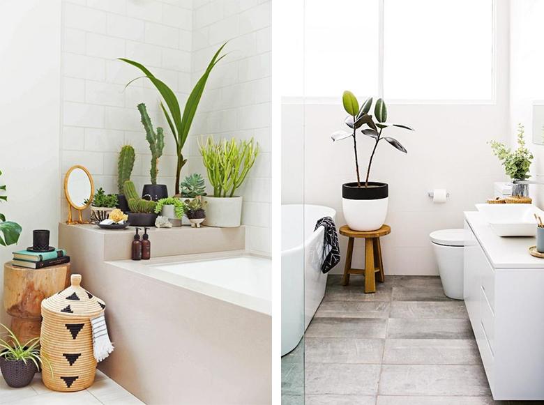 salle de bain plantes
