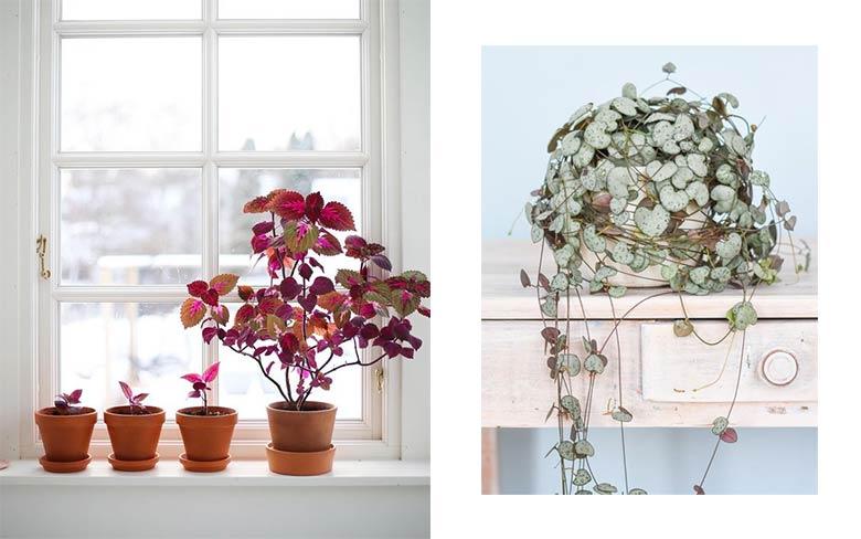 depolluer l'air intérieur plantes dépolluantes
